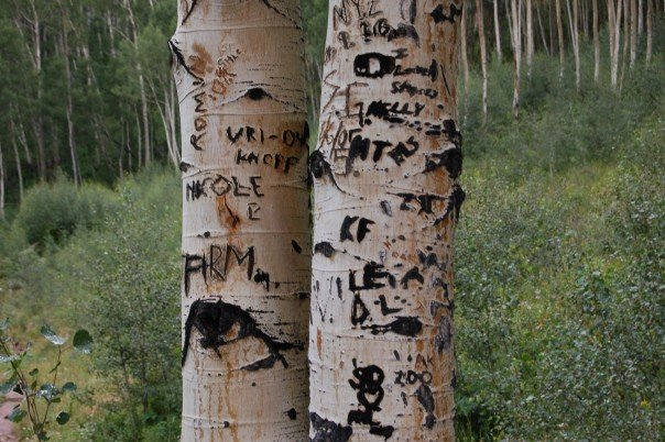 Aspen trees at Maroon Bells