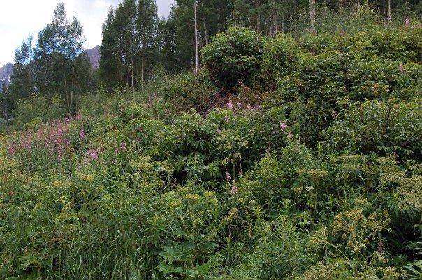 Maroon Bells wilderness area