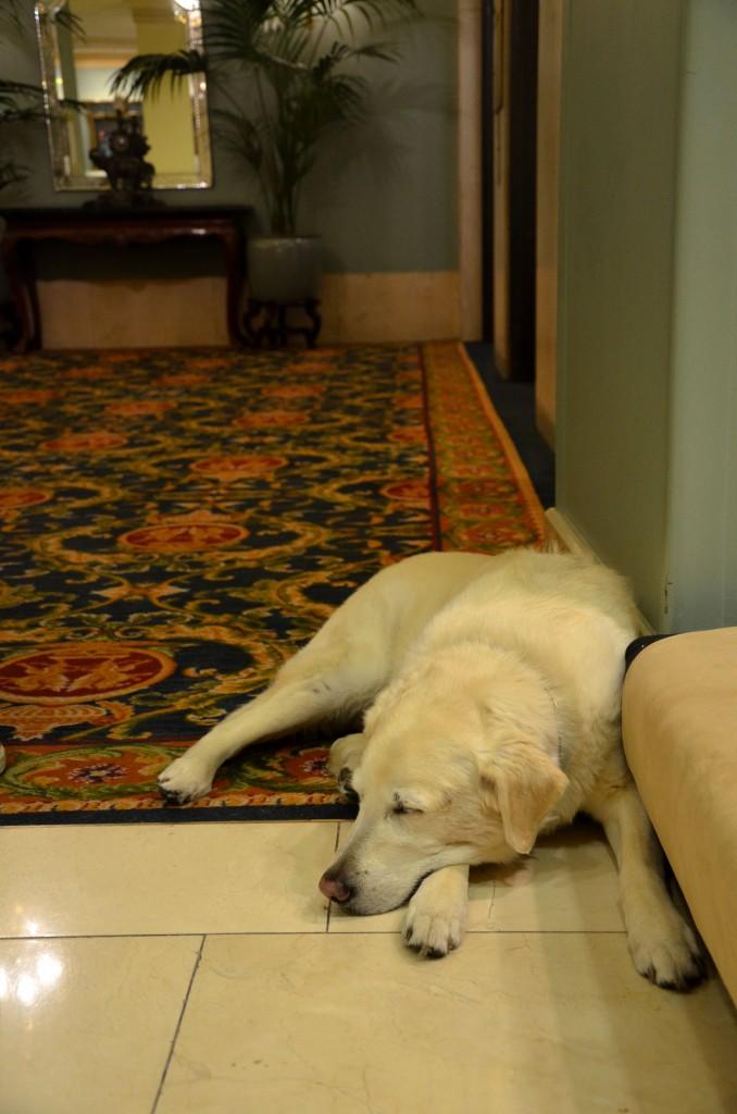 Fairmont Hotel Vancouver dog