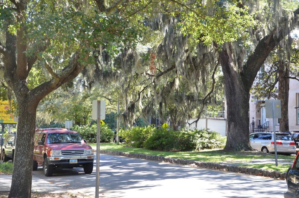 Mossy trees in Savannah, Georgia