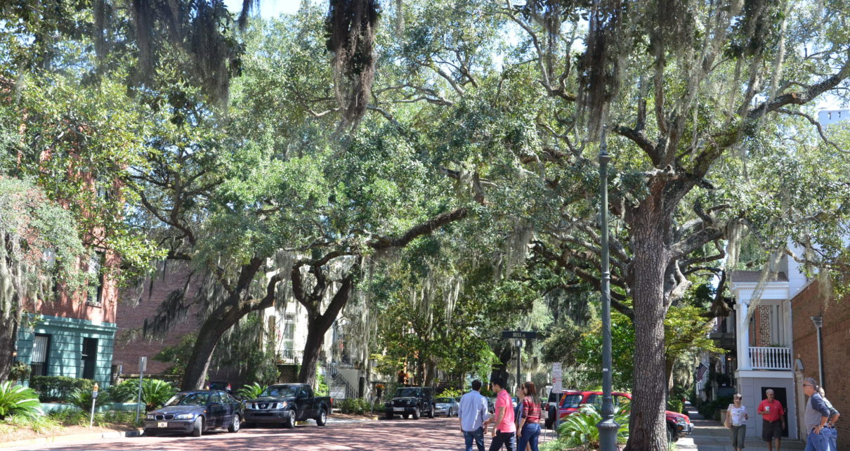 Mossy trees in Savannah, Georgia