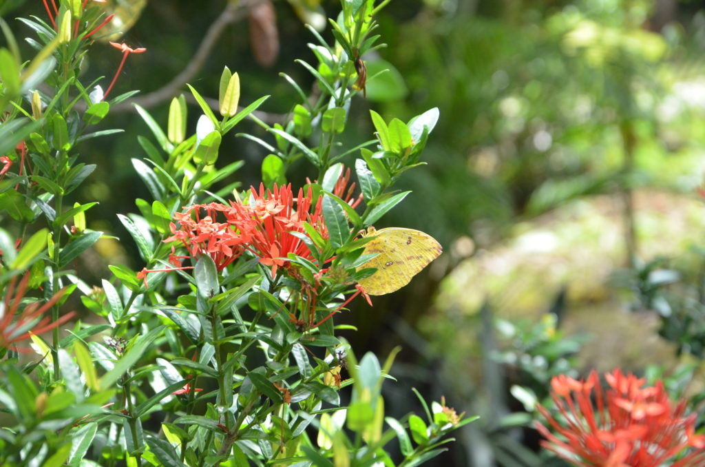 Flowers and a butterfly at Peace Retreat in Costa Rica
