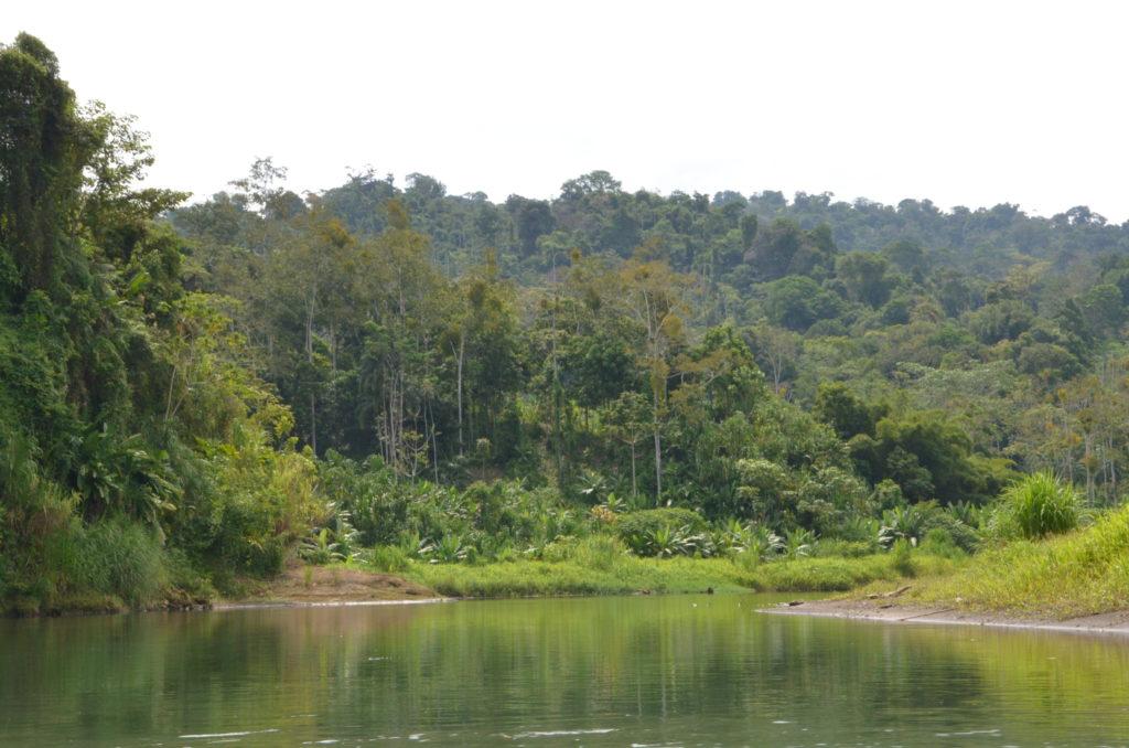 Yorkin River