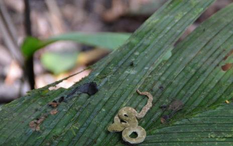 Snake in Costa Rica