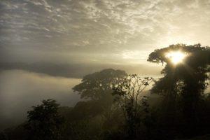 Volunteer in Cloud Forest Restoration in Ecuador