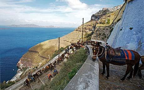 mule ride