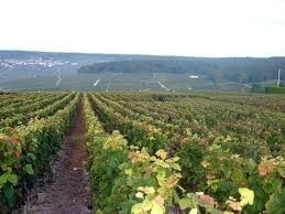 one of the champagne farms in Champagne