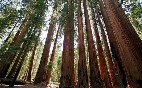 summer-holidays-california