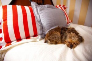 dog-on-bed